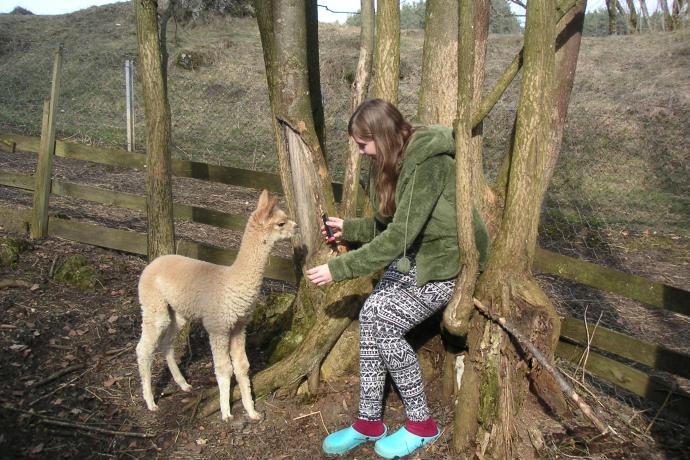 Bambi entdeckt die Welt Frankens.