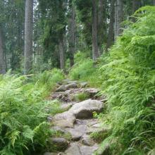 Weg am Dreisesselberg