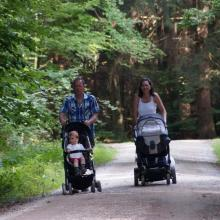 Wandern und Spazierengehen im Steigerwald